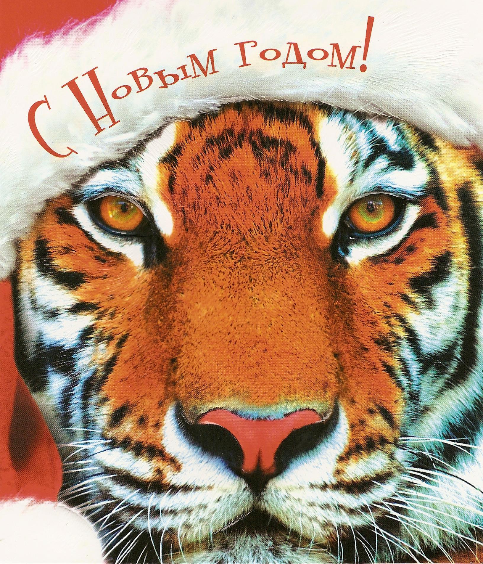 Поздравление к году тигра